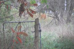 Open Gateway in a Meadow royalty free stock photography