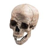 Open geïsoleerde mond van de Sidetview de menselijke schedel stock afbeelding