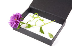 Open gift box with  flower Royalty Free Stock Image