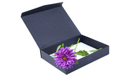 Open gift box with  flower isolated Stock Photography