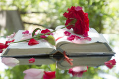 Open Glowing Bible in Nature Royalty Free Stock Photo