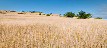 Open grassland panorama Stock Image