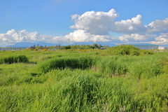 Open Grassland on Sea Island Royalty Free Stock Photo