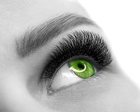 Open green eye of woman with eyelash extension. Well groomed skin, macro shot, black and white, close up, selective stock image