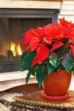 Open haard en bloem Stock Fotografie