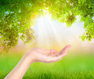 Open hand  over nature background imagination Stock Image