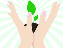 Open hands up with plant Royalty Free Stock Photos