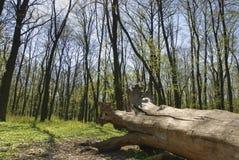 Open het bos het programma Stock Fotografie