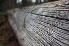 Open het bos het programma Royalty-vrije Stock Foto's