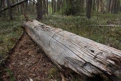 Open het bos het programma Stock Afbeeldingen