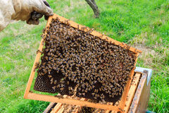 Open hive, beekeeping. Open hive detail. Beekeeping, agriculture, rural life stock image