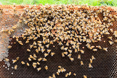 Open hive, beekeeping. Open hive detail. Beekeeping, agriculture, rural life royalty free stock photo