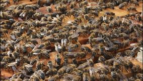 Open the hive stock video footage