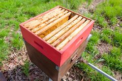 Open hive, beekeeping. Open hive detail. Beekeeping, agriculture, rural life Royalty Free Stock Photos