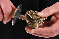 Open and hold one and fresh oyster Stock Image
