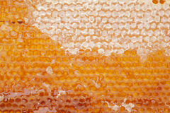 Open honeycomb. Background from honeycomb with open and close cells Stock Photo