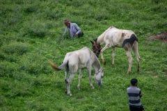 Open Horse farm royalty free stock photo