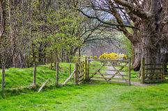 Open houten poort in platteland Royalty-vrije Stock Afbeeldingen