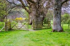 Open houten poort in platteland Royalty-vrije Stock Foto
