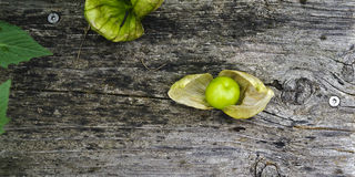Open husk with tomatillo fruit Royalty Free Stock Photos