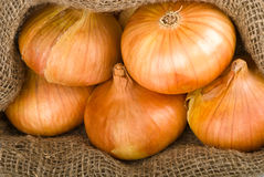 Open jute sack with onions Stock Photography