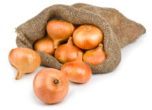 Open jute sack with ripe onions Royalty Free Stock Images