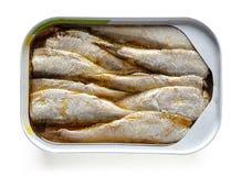 Open kan av sardiner som isoleras på vit, från över arkivbild