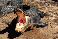 Open krokodillemond royalty-vrije stock afbeeldingen