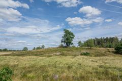 Open landscape with some trees. Land that has been used for Pasture for a long time Royalty Free Stock Photo