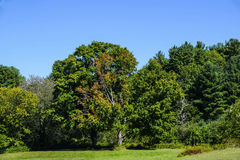 Open landscape. A view of  the open landscapes  in central massachuetts Stock Photo