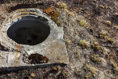 Open manhole without cover Royalty Free Stock Images