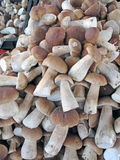 An Open Market Stall Displaying Wild Picked Mushrooms. Royalty Free Stock Photography