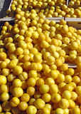 An Open Market Stall Displaying Yellow Plums. Stock Photos