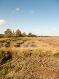 Open marshland landscape scene with blue skies, clouds, and gras. S; essex; england; UK Royalty Free Stock Image