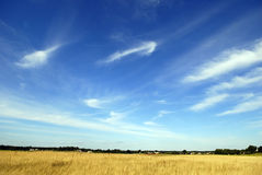 Open Meadow with Blue Sky. Panoramic view of a vast grassy meadow with horizon with blue sky and wispy clouds.  Meadow appears to be ready for haying with Stock Photos