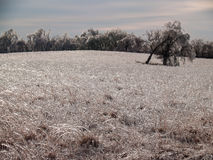 Open Meadow Covered in Ice. Field in Oklahoma covered in ice after the devastating January 2007 North American Ice Storm Stock Image