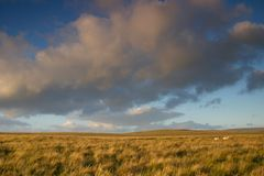 Open moorland. A view of Dartmoor, UK Stock Image