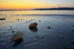 Open mosselshells op zand stock afbeelding