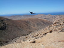 Open Mountain window  view with bird in Fuerteventura Canary/islands Stock Photos