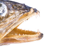Open mouth dry fish Royalty Free Stock Photo