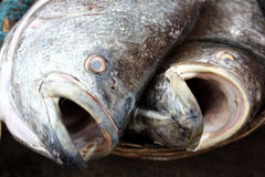 Open Mouth Fish Background Royalty Free Stock Photo