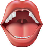Open mouth with missing teeth. Adobe Illustrator gradient mesh tool was used. CMYK color Stock Photo