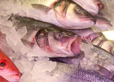 Open-Mouthed Salmon. Close-up of salmon on ice at St.Lawrence Market in Toronto, Canada Stock Photos