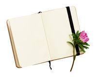 Open notebook and aster flower Royalty Free Stock Photos