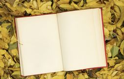 Open notebook on autumn leaves. royalty free stock photos