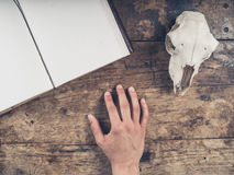 Open notebook on desk with male hand and sheep skull. An old notebook with a sheep skull and the hand of a young man on a wooden desk Stock Photos