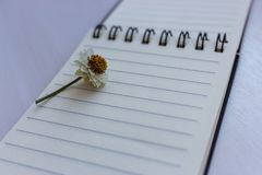 Open notebook with empty pages and small camomile flower on it . Writing background. Diary and organizer book. Business and beginning concept. Memo book royalty free stock images