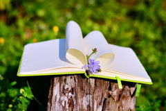 Open Notepad with heart made with pages and blue flower Stock Photo