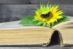 Free Open Old Book And Sunflower Royalty Free Stock Photo - 156254555