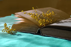 Open old book on the blue tablecloth with yellow mimosa flowers near it. - spring still life in dark vintage tones Royalty Free Stock Image